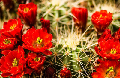 Desert In Bloom – Peterman's Eye – The J Peterman Company